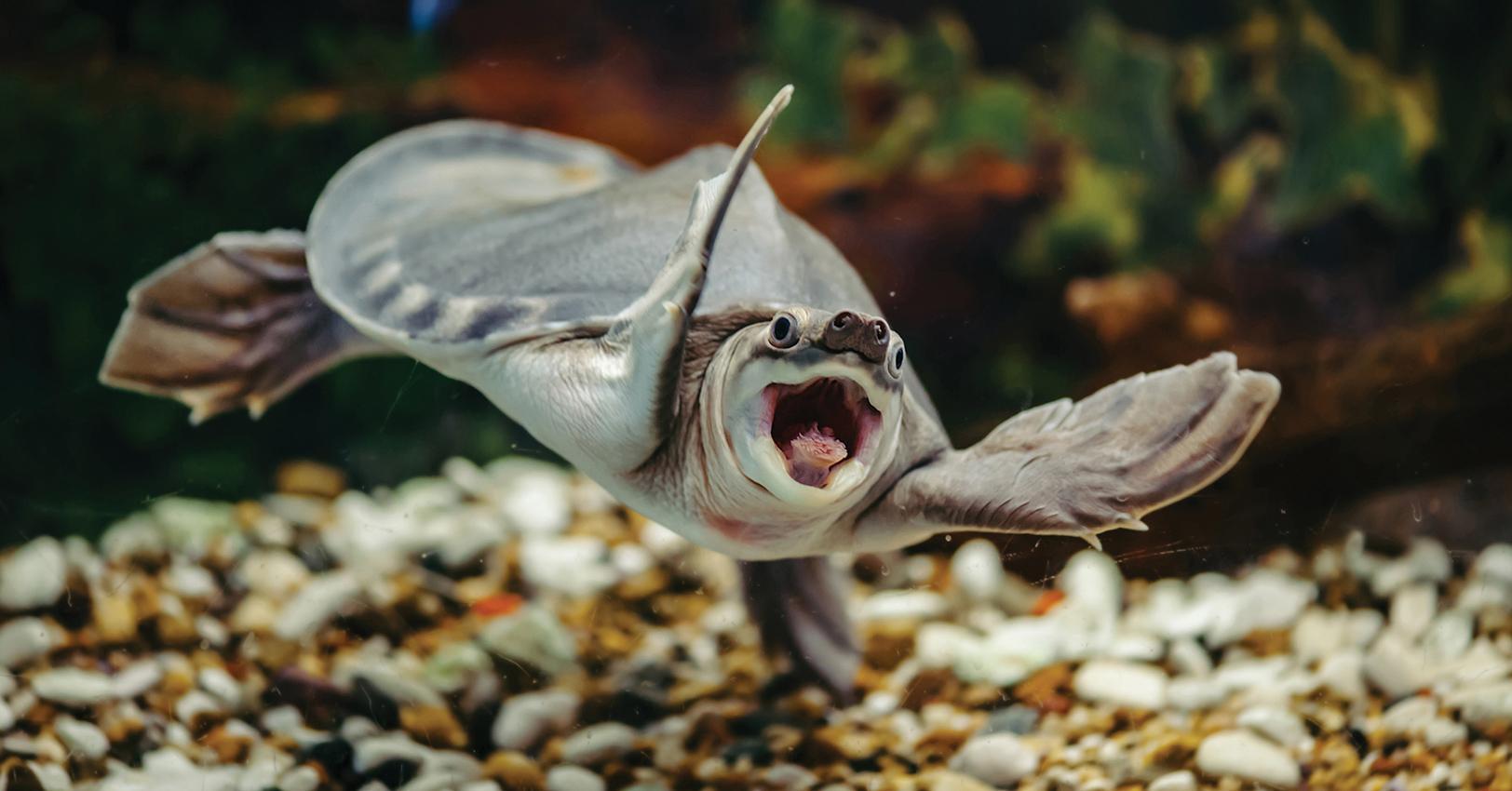 turtlethumb-1526495663874.jpg