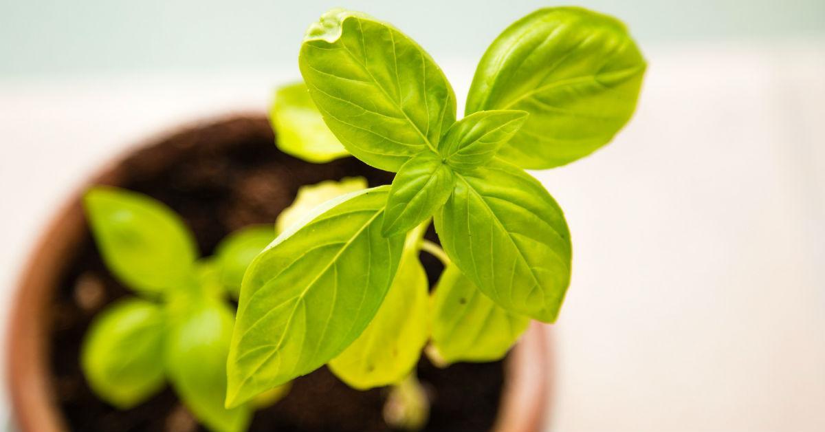 plant-in-sun-1534278931839-1534278933608.jpg