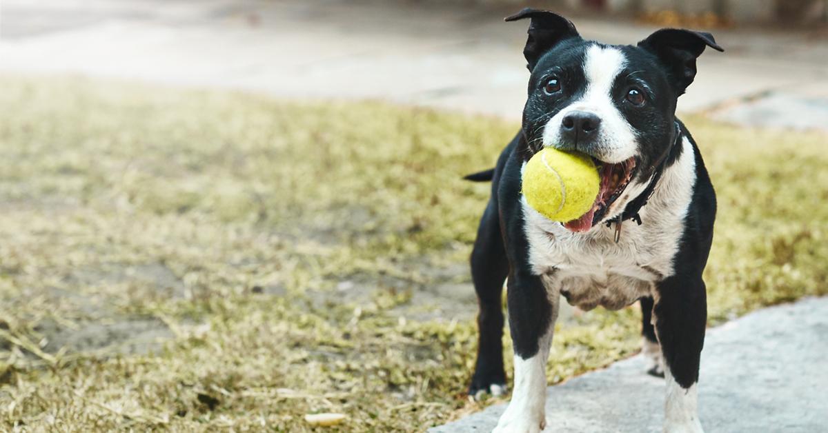 dog-toy-1545670269668.jpg