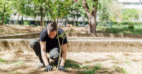 planting-trees-carbon-footprint-1574865105597.jpg
