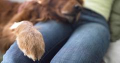 Dog dry paws
