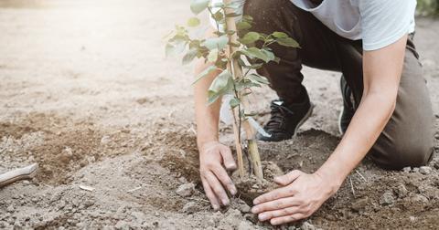 plant-tree-1588697206502.jpg