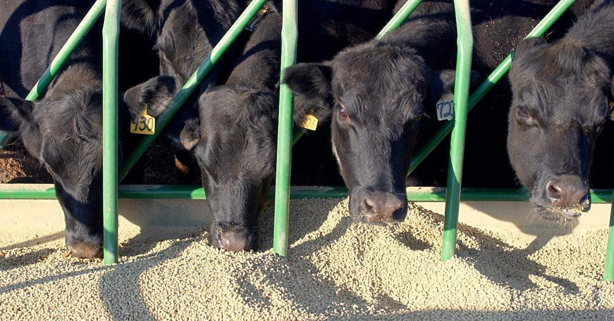 Cows Seaweed Methane