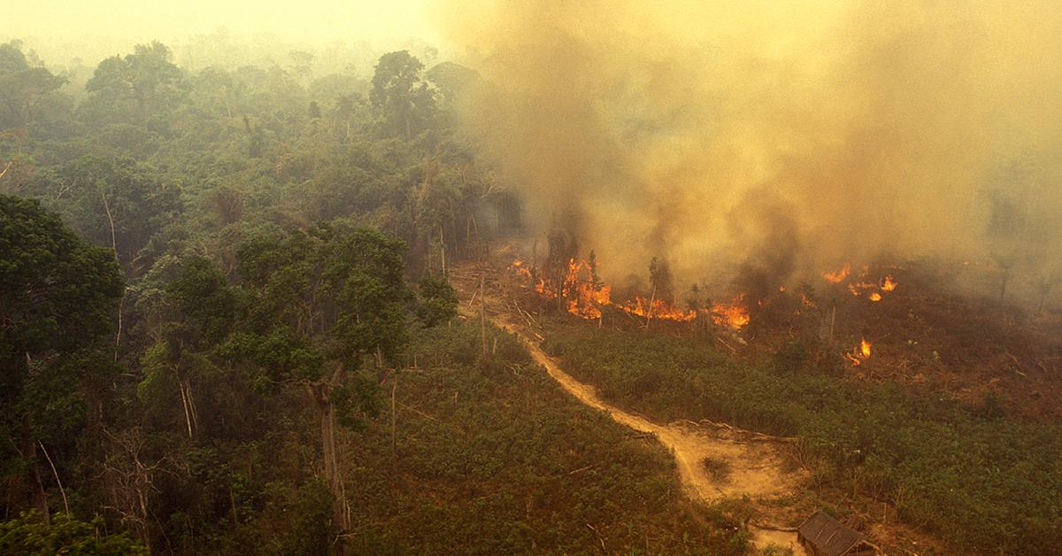 The World Can't Survive Without the Amazon: Here's Why