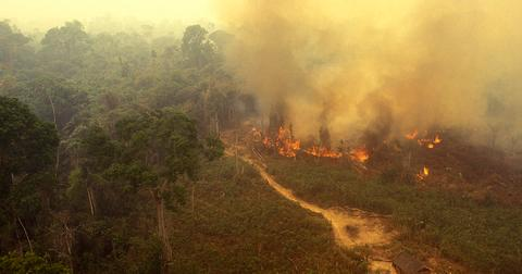 amazon-rainforest-fire-1566495402620.jpg