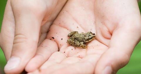 new-frog-1607963052404.jpg