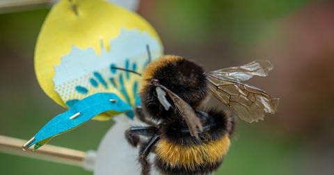 bee-food-for-buzz-1553026546365.jpg