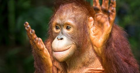 most-intelligent-animalscov-1606245304833.jpg