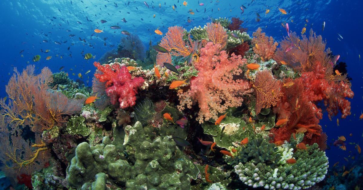 why are coral reefs important to the ecosystem