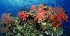 为什么珊瑚礁对生态系统很重要