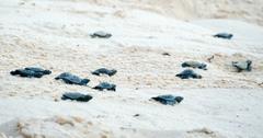 海龟墨西哥