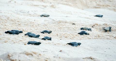 sea turtles mexico