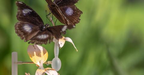 Insectology-Food-for-Buzz_Janneke-van-der-pol_MothFlower-1553091139465.jpg