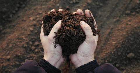 how-to-use-compost-as-fertilizer1-1604433851879.jpg