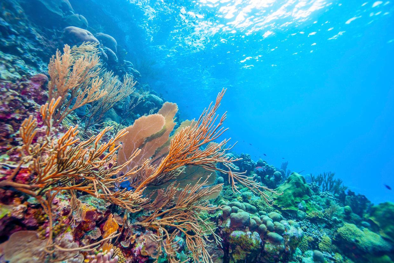 coral-reefs-1565901560726.jpg