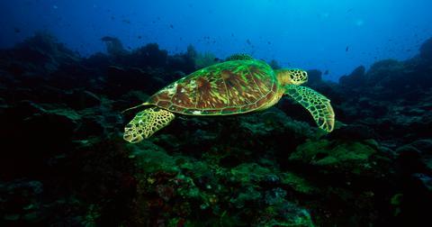 什么导致海洋酸化