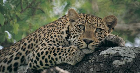 what is the difference between an endangered species and a threatened species