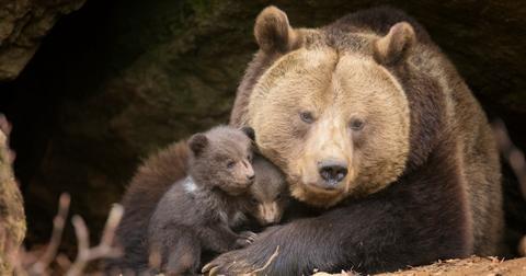 trump-administration-wildlife-cruelty-1591043695516.jpg