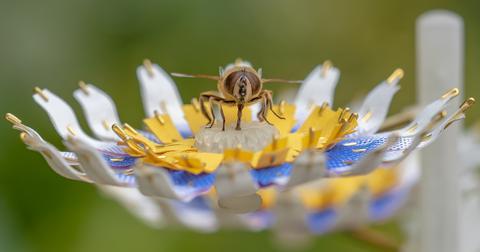 Insectology-Food-for-Buzz_Janneke-van-der-Pol-Bee-Flower-1553091057086.jpg