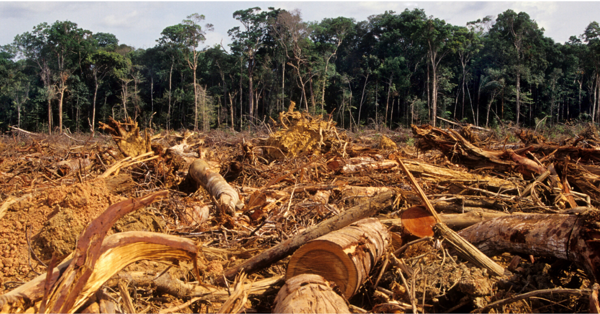 Why Deforestation Is a Problem