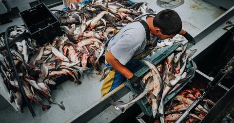 fishing-bloody-1593726617893.jpg