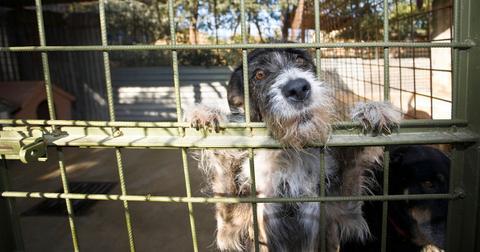 adopt-a-shelter-dog-day-1588268550755.jpg