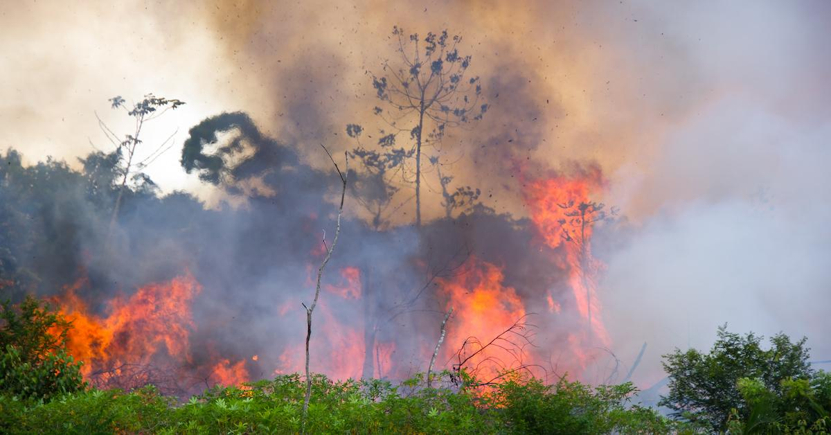 Your Biggest Questions About the Amazon Rainforest Fires, Answered