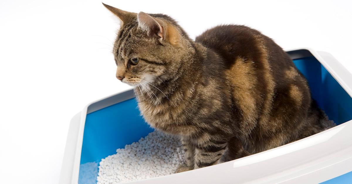 What are the best eco-friendly cat litters?