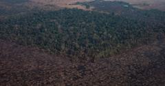 亚马逊雨林大草原