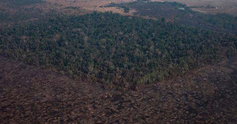 amazon-rainforest-savanna-2064-1610385374785.jpg