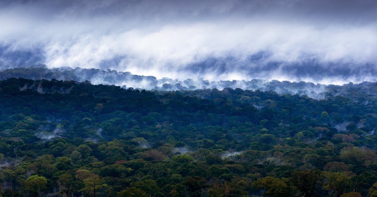 deforestation africa satellites