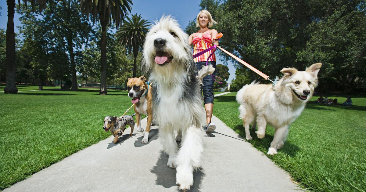 Pets Heat Wave