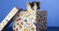 让猫远离圣诞树