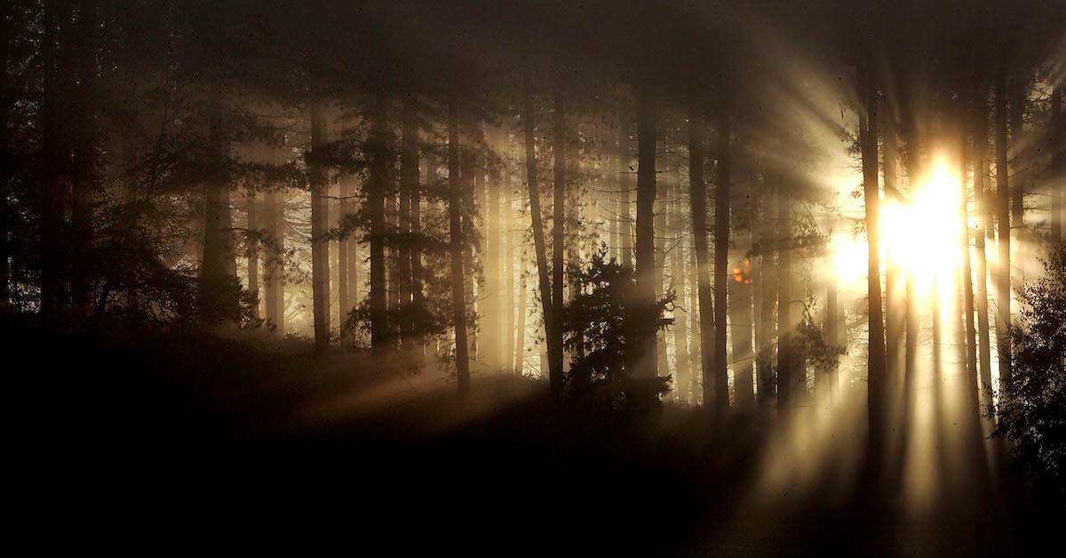 Tree pod burials