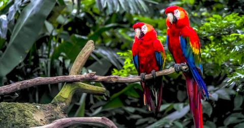 amazon-rainforest-biodiversity-1566495480130.jpg