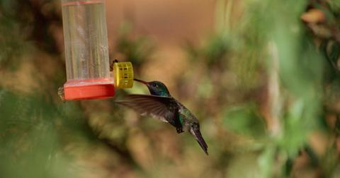 How to keep bees away from a hummingbird feeder