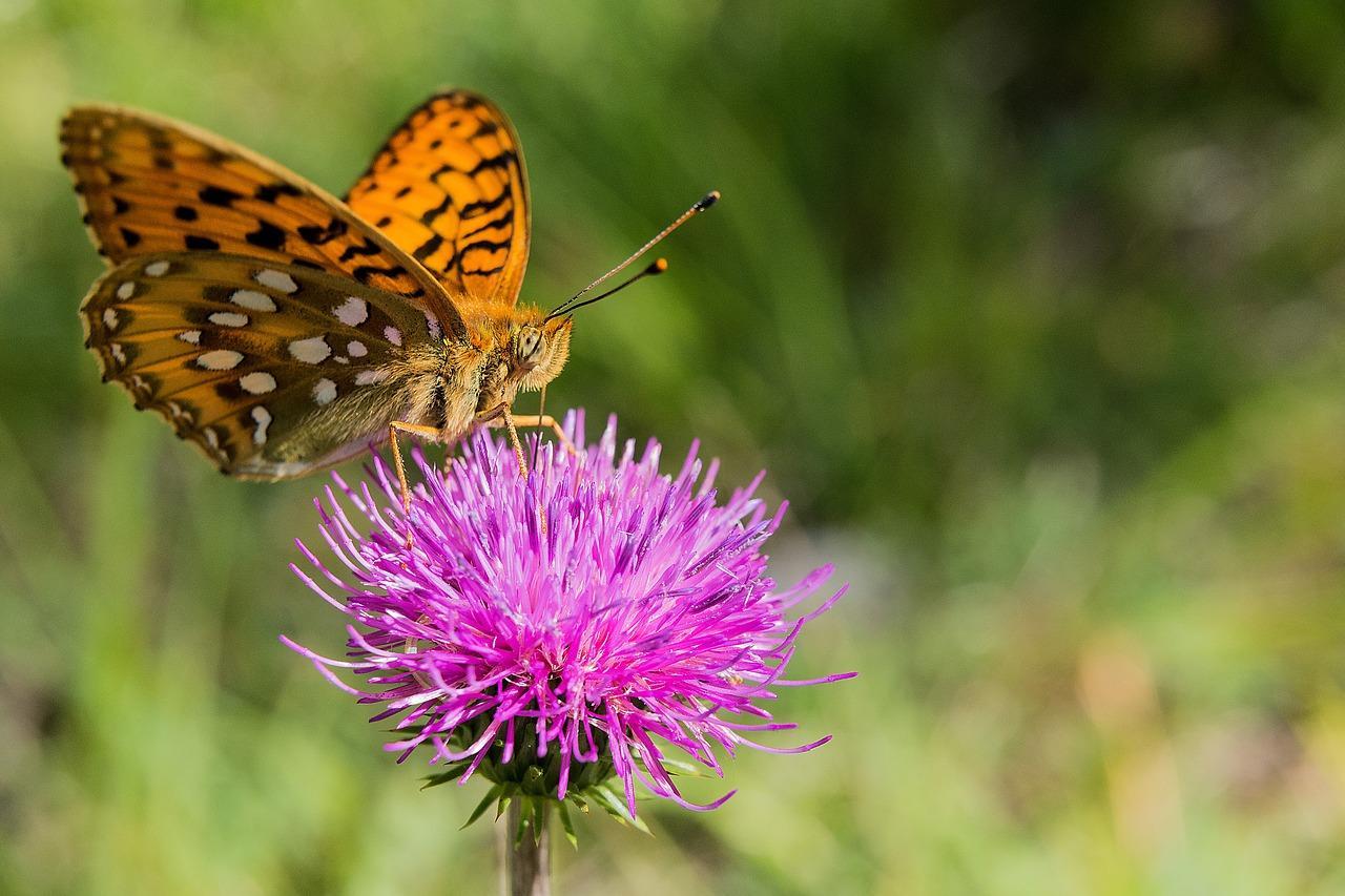 butterfly-2492649_1280-1508781126378-1508781129156.jpg
