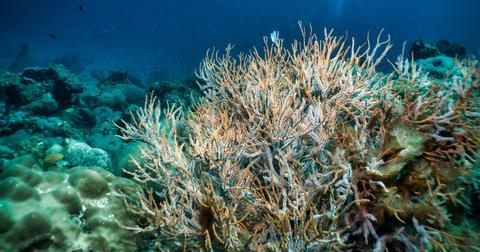 global-warming-effect-ocean-aciditification-1576273819708.jpg