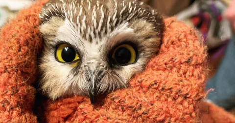 owl-rescue-1605816880108.png
