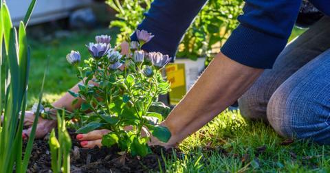 gardeningbanmichigan