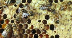 Bees Extinct