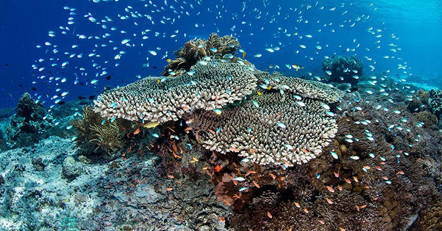 coral-reef-restoration-1543954443623.jpg