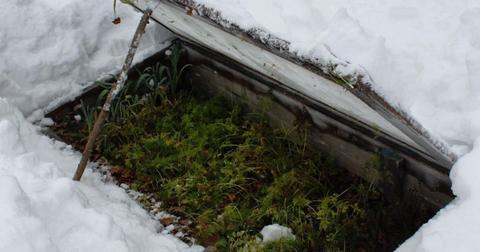 cold-frame-gardening-1608588670663.jpg