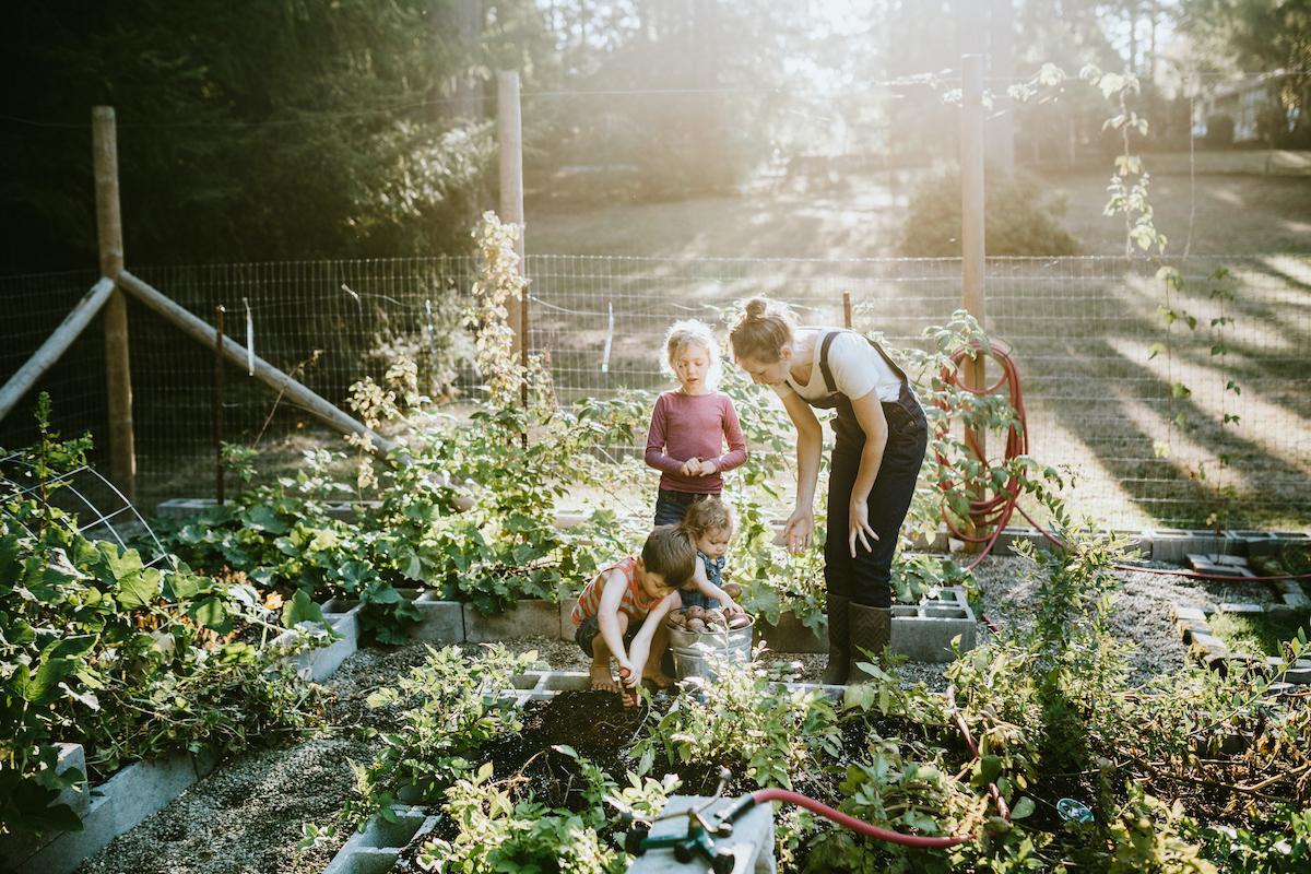 garden-1591900409613.jpg