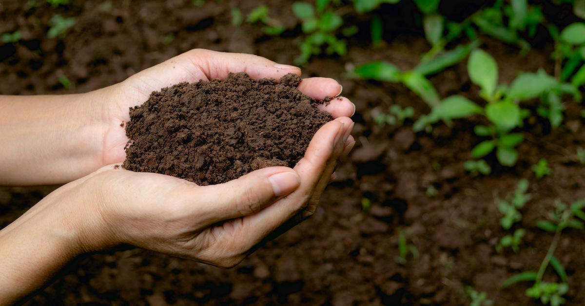 recomposition-composting-washington-human-1558624213753.jpg