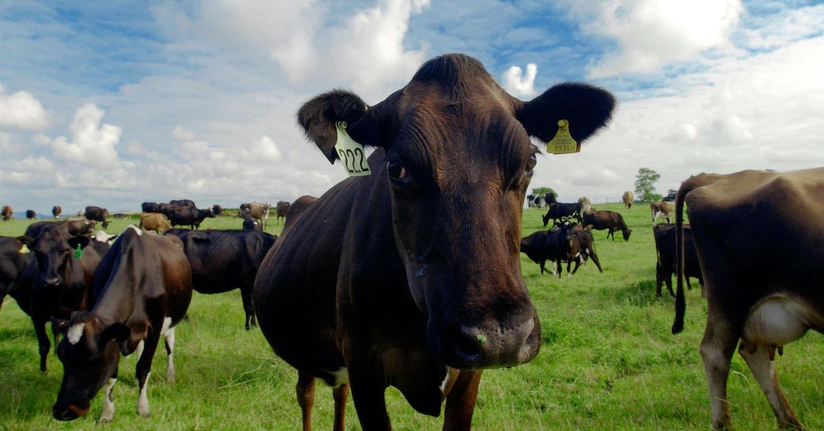 greenhouse-effect-cows-1571689442241.jpg