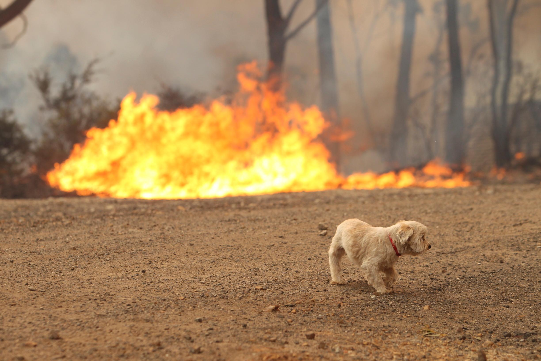 Australia's Wildfires Have Killed More Than 1 Billion Animals