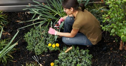 gardeniing