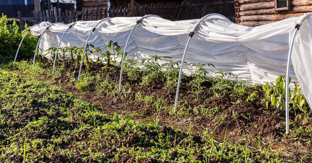 vegetable-garden-plant-covers-1564770846558.jpg