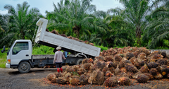 Does Environmentally Friendly Palm Oil Exist?